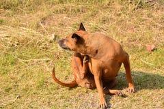 Dog sitting on ground at morning. Cute dog sitting on ground at morning Royalty Free Stock Photo