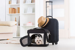 Dog sitting in his transporter stock image