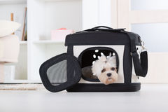 Dog sitting in his transporter Royalty Free Stock Photo