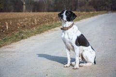 Dog sitting Stock Photography