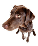 Dog sitting and looking on the side. Royalty Free Stock Photos