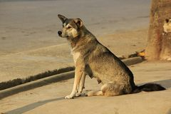 The dog is sitting looking at something. royalty free stock images