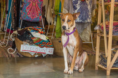 The dog is sitting at market in India, North Goa, Arambol.  Stock Images
