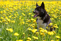 Dog sitting on meadow. stock images