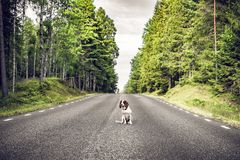 Dog sitting in the middle of the road royalty free stock image