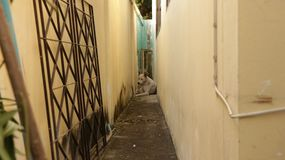 Vintage Narrow Alley Between Walls with Dog Sitting in the Middle royalty free stock photo