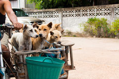 Dog sitting on the motorcycle going to travel Royalty Free Stock Photo