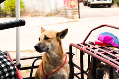 Dog sitting on the motorcycle going to travel Royalty Free Stock Image