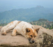 Dog sitting on a mountain top Royalty Free Stock Image