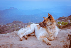 Dog sitting on a mountain top Royalty Free Stock Photography