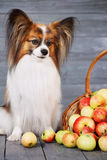 Dog sitting near the basket Royalty Free Stock Photo