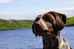 Dog sitting near a lake. Brown dog sitting near a lake in the highlands  of Scotland Stock Photography