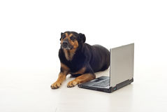 Dog sitting near laptop Royalty Free Stock Photography