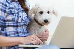 Dog Sitting Next To Owner Using Laptop Royalty Free Stock Photo