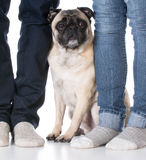 Dog sitting at owners feet Royalty Free Stock Photos