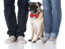 Dog sitting at owners feet Royalty Free Stock Photo