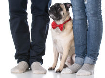 Dog sitting at owners feet Stock Photos