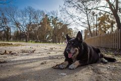 Dog. Sitting in a park Royalty Free Stock Photo