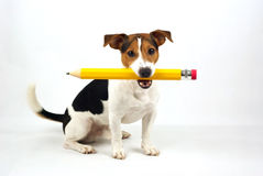 Dog sitting with a pencil Stock Photography