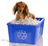 Dog sitting in recycle bin