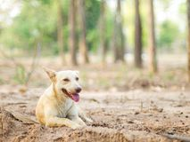 Dog sitting rest and panting in the heat of the day. Stock Images