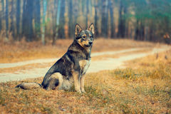 Dog sitting on the road Royalty Free Stock Images