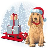 Dog sitting in Santar hat next to gift. Golden Cocker Spaniel Dog sitting in Santa hat next to gift. Vector Royalty Free Stock Photography