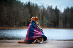 Dog sitting on shore of lake and look forward Royalty Free Stock Photos