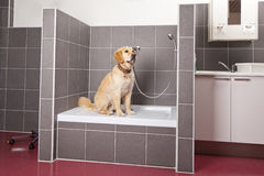 Dog sitting in shower at veterinarian Royalty Free Stock Images