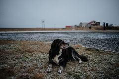 A dog sitting on the side of the road. In Iceland Royalty Free Stock Photo