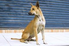Dog sitting on the sidewalk elegant swagger Stock Images
