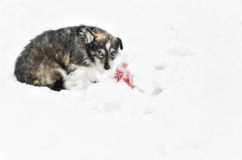Dog sitting in the snow Royalty Free Stock Image