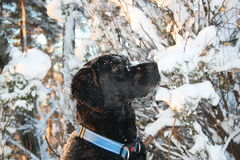 Dog. Sitting in the snow Stock Image