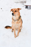 Dog sitting in snow Stock Images