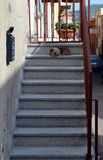 Dog sitting at staircase to defend his home Stock Photo