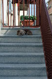 Dog sitting at staircase to defend his home Stock Images