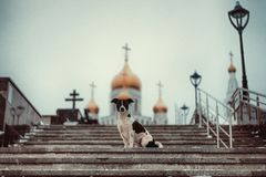 Dog sitting on the steps against the Church stock photography