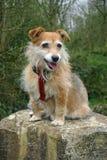 Dog sitting on stone Royalty Free Stock Photos