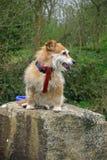 Dog sitting on stone Stock Images