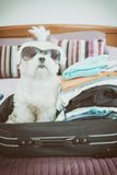Dog sitting in the suitcase Royalty Free Stock Image