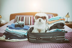 Dog sitting in the suitcase Stock Image