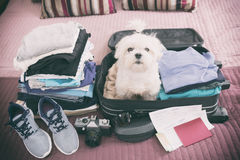 Dog sitting in the suitcase Stock Photos