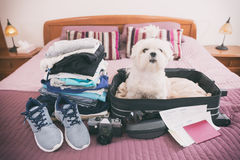 Dog sitting in the suitcase Stock Photography