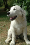 Dog sitting the sun Royalty Free Stock Photos