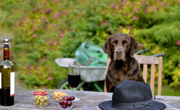 Dog Sitting at Table Stock Image