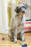Dog sitting among toys Stock Images
