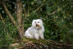 Dog sitting on a tree Royalty Free Stock Photo