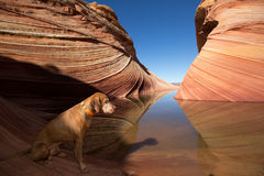 Dog sitting by the water in the wave coyote butte Royalty Free Stock Photo