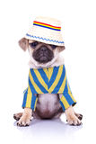 Dog sitting wearing clothes and hat Royalty Free Stock Photography