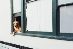 Dog sitting on window Stock Images